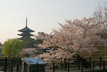桜と柳と五重塔