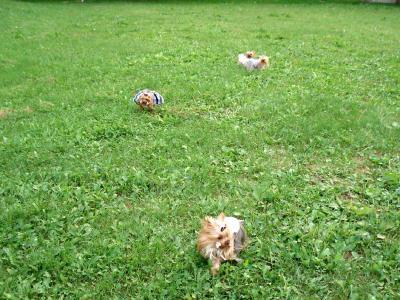 公園で遊びます