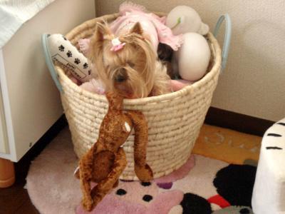 おもちゃかごに飛び込むグーたん