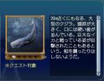 海洋生物:マッコウクジラ