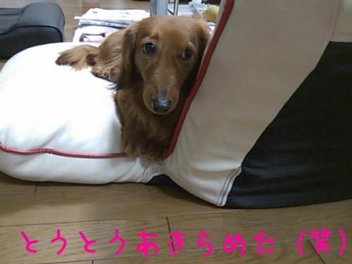 Rz8foU0u_convert_20090525135010.jpg