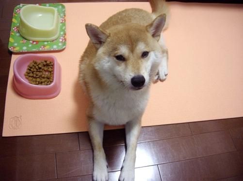 柴犬ズン画像 ぶーちゃんだよね~