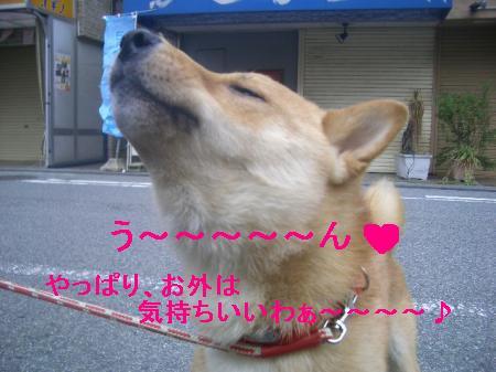CIMG3295_convert_20090426222039.jpg