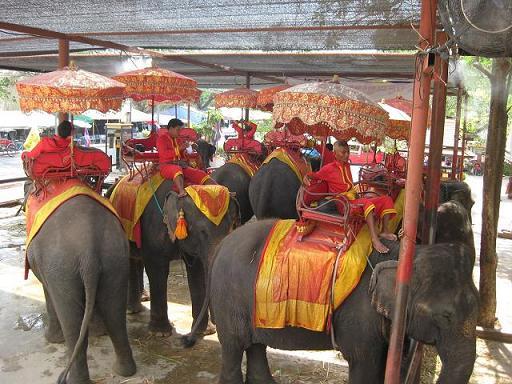 ゾウの停車場