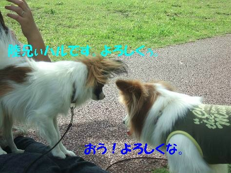 DSCF6084_sh01.jpg