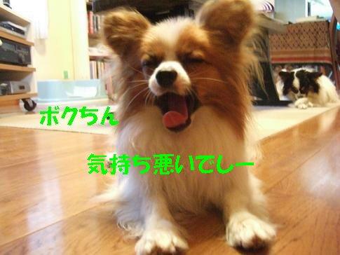 DSCF6160_sh01.jpg