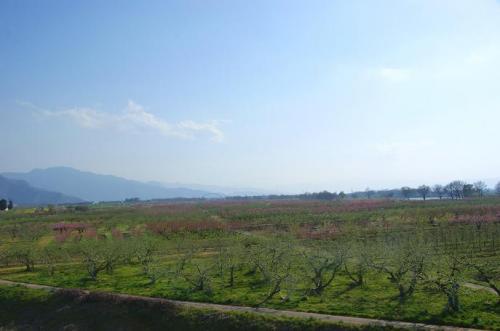 高原の風とピンクの季節13