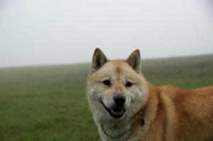 霧の中~6