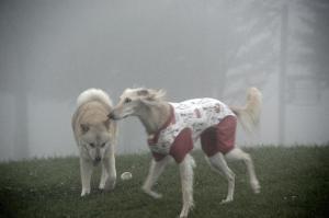 霧の中~2