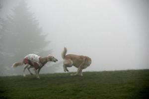 霧の中~1