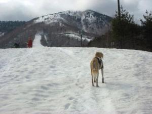 クローズのスキー場7♪