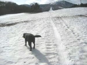 クローズのスキー場9♪