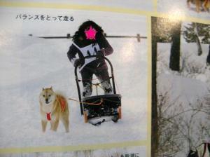 浅間犬ソリ大会