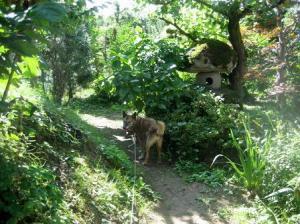 老犬の冒険1