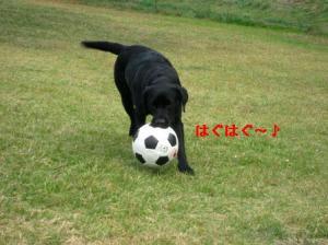 大きいボールも大好き♪