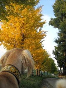 公園の秋3