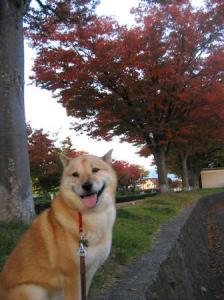 公園の秋5