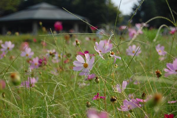 20080914_7.jpg