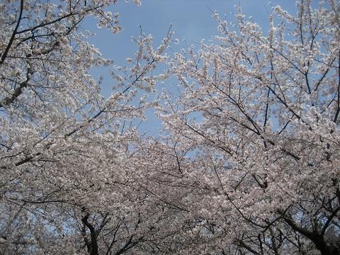 0410FURUKAWA11.jpg