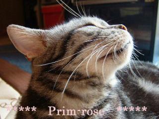 2006_0629_prim.jpg