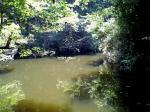 景色 2009年8月18日 実家近くの野池