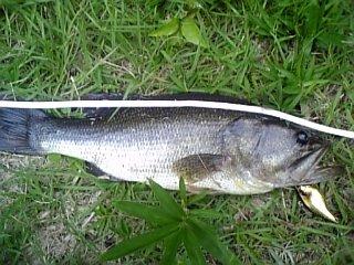 釣り 2009年8月13日 46センチ