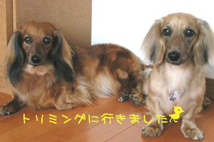 PICT0145.jpg