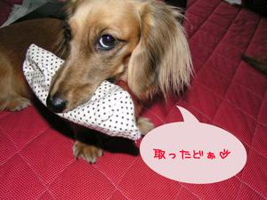 PICT0157.jpg