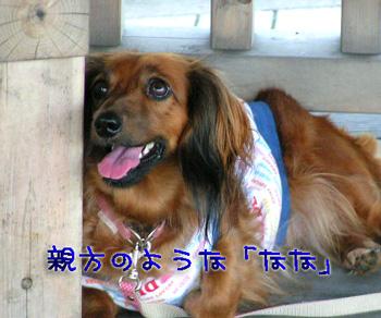 PICT0170.jpg