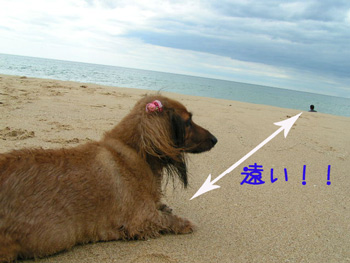 nanaumi.1.jpg