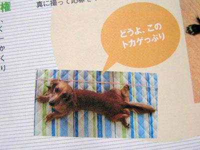 tokagehina.jpg