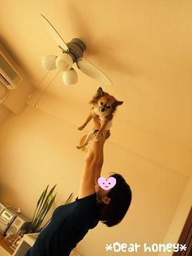 090815dog yoga