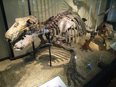国立科学博物館05