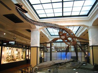 国立科学博物館06