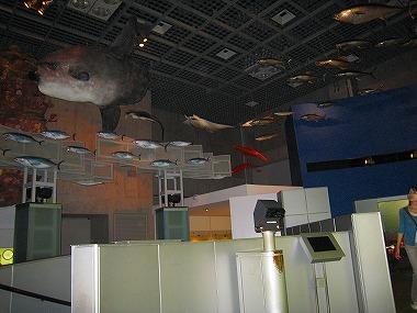 国立科学博物館26