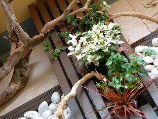 gardening0821_3.jpg
