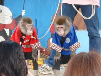 お猿さんショー