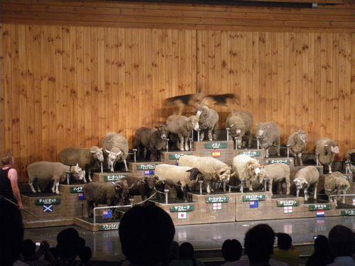 sheep100709.jpg