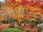 円光寺の庭園