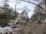 名所「覚円峰」と遅咲きの桜