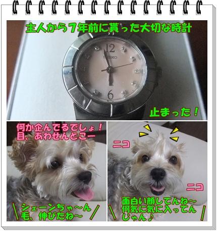 旧時計pq