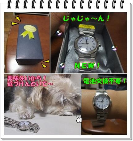 新時計qp