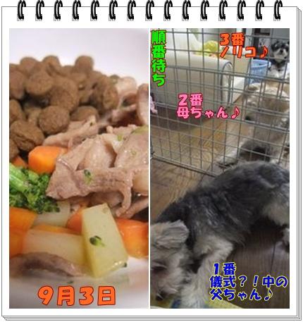 9月4日kg