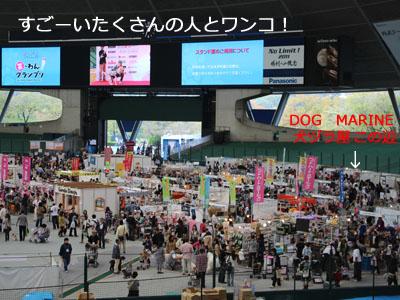 スーパードッグカーニバル2011①