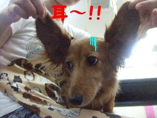 2008_08160011.jpg