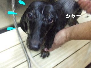 2008_08160035.jpg