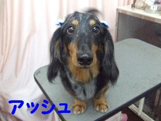 2008_08160051.jpg