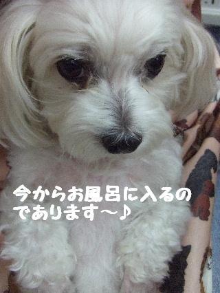 2008_08190027.jpg