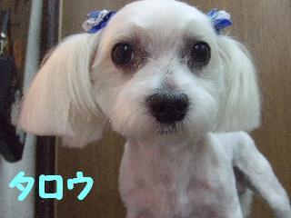 2008_08190051.jpg