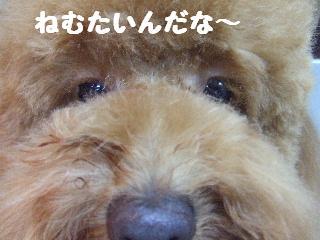 2008_08230074.jpg